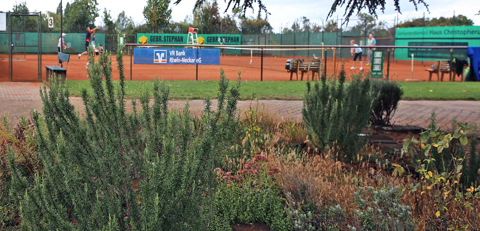 tennisclub-oppau-tennis-in-ludwigshafen-breitensport